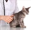 Ветеринарные клиники в Оконешниково